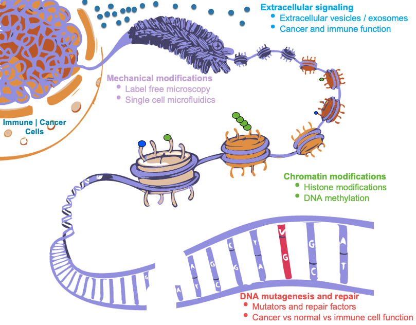 Immune Cancer Cells DNA mutagenesis and repair